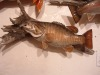 smallmouth-s-curve-front-view-10-27-08