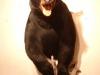 bear-hls-om-left-trn-i-up-i-dn-drftwd-9-08