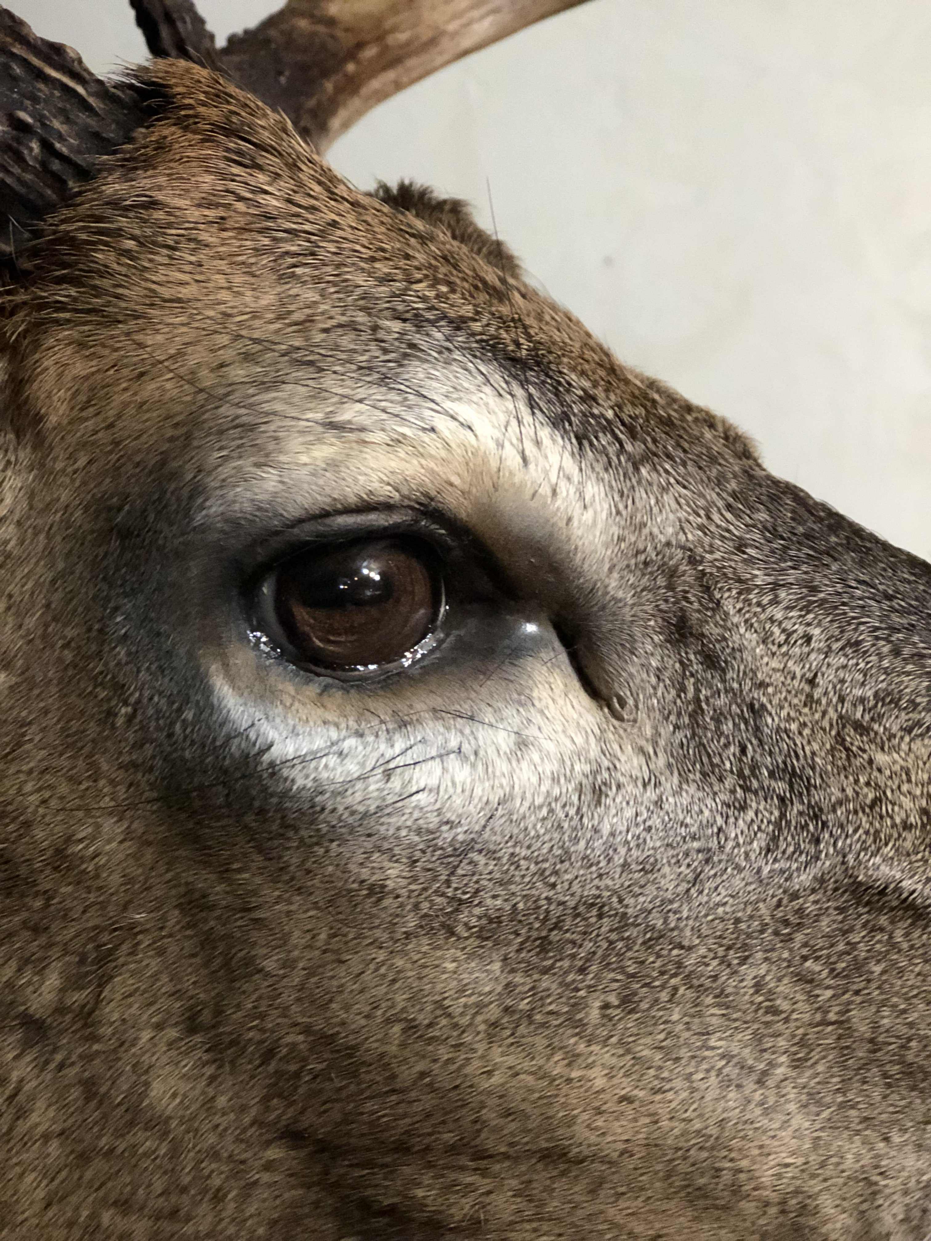 WT-Eye-Detail